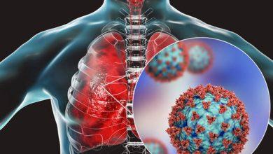 """Photo of العلماء يحددون """"الشرطي المناعي"""" المكتشف لفيروس SARS-CoV-2"""