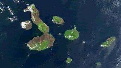Photo of العلماء يحلون لغز النظام البيئي الاستثنائي لجزر غالاباغوس
