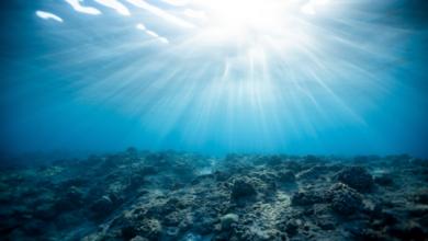 Photo of اكتشاف ديدان مخيفة قفزت من قاع البحر وقطعت الأسماك إلى النصف قبل 20 مليون سنة
