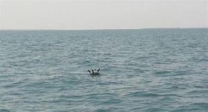 Photo of القوات المشتركة تعثر على شبكة ألغام بحرية حوثية في جزيرة بالبحر الأحمر